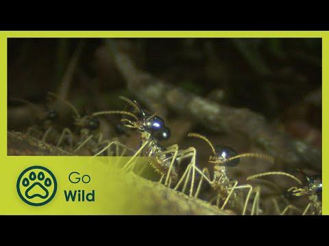 Termites - The Inner Sanctum - The Secrets of Nature