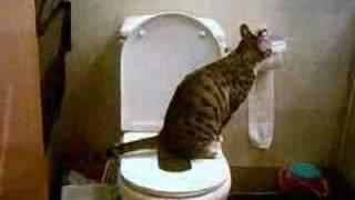 cat training toilet (large - 2)