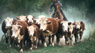 The Cattle Call by Eddy Arnold