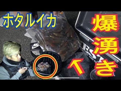 【身投げ】富山湾のホタルイカの爆沸きが神秘すぎる