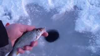 Зимняя рыбалка. р.Троца 29.11.15. Открылся.