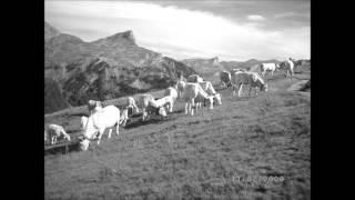 Le mouton de Panurge (Georges Brassens) Reprise