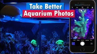 How To : Reef Aquarium Photography - Cell Phone &  Iphone coral photography filters and gels