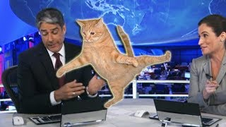 Cães e gatos invadem noticiários - vídeos engraçados