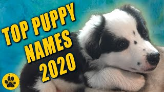 Cutest Boy Puppy Names