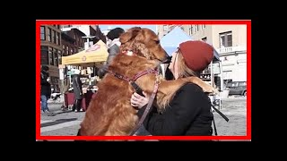 | Dog Rescue StoriesNew York Dog Stands On The Street Corner To Give Hugs To Strangers