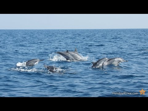 Relaxing Dolphin Sounds Meditation - Healing Music Therapy - Nature Relaxation HD