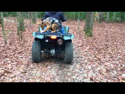 Check Out 5-Month Old Aussie/German Shepherd Mix, Amazing Video!  Dog Trainers In Virginia!