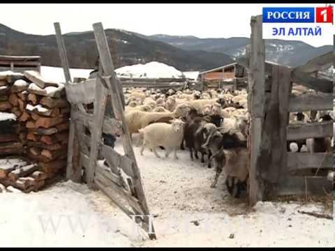 Улаган аймак, Токой(05.12.2013)