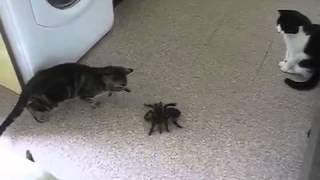Коты против огромного паука