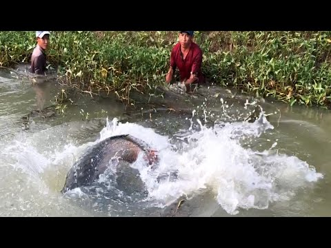 Hunting BIGGEST Dragon Fish from AMAZON River Monsters