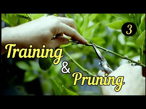    Training & Pruning    Horticulture