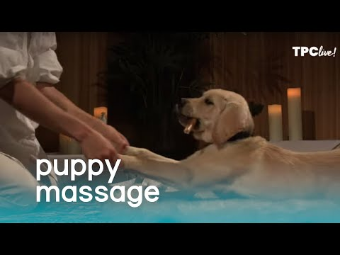 TPC Live! Puppy Massage | The Pet Collective