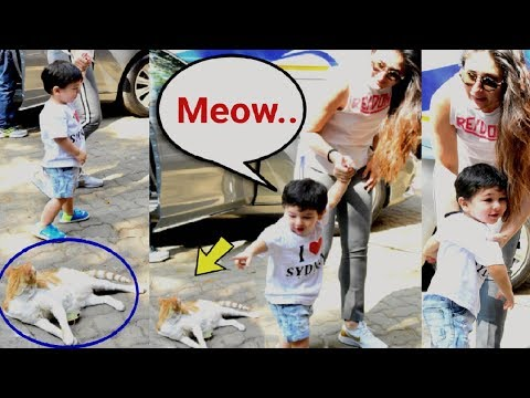Taimur Ali Khan Say MEOW On Seeing Cat - Cute Video