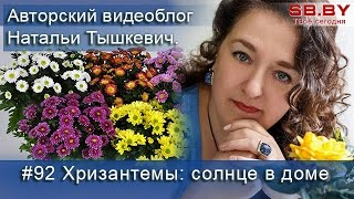 видео Хризантемы. Особенности, уход и размножение
