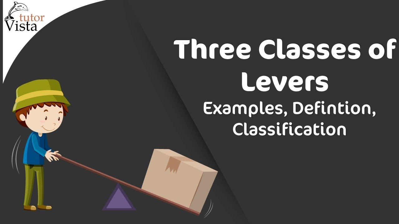 Three Classes Of Levers Examples Defintion Classification Youtube Hydra Anatomy Diagram Tutorvista Answers