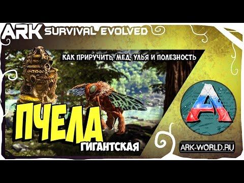 Гигантская ПЧЕЛА ARK Survival Evolved! Полный обзор! Приручаем Пчел для улья!