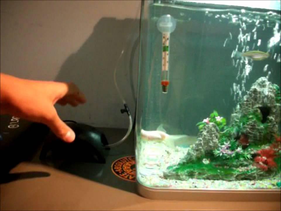 Cool Goldfish Tank Youtube