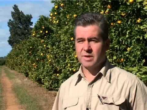 Citrus Pest Monitoring