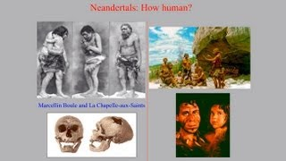 CARTA:The Evolution of Human Nutrition--Alison S. Brooks and Margaret Schoeninger:Neanderthal Diets