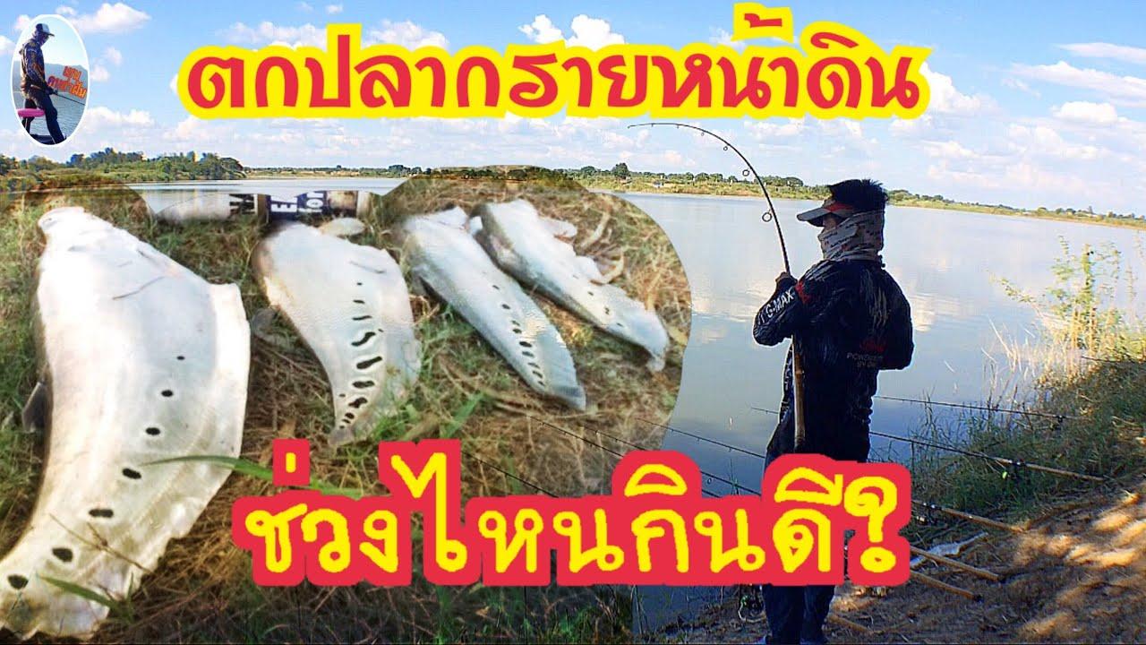 ฤดูกาลที่ปลากรายกินจัด และดุมาก