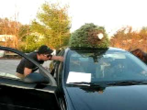 Tying A Xmas Tree On A Car That Has No Roof Racks Avi