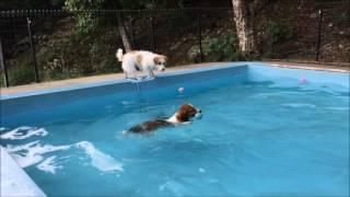 http://jackpeace.blog.fc2.com/ Jack Russell Terrier Kooikerhondje.