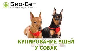 Купирование ушей у собак. Ветеринарная клиника Био-Вет.