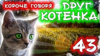 КОРОЧЕ ГОВОРЯ, НОВЫЙ ДРУГ КОТЕНКА 43 [От первого лица] Бездомный котенок Лайки