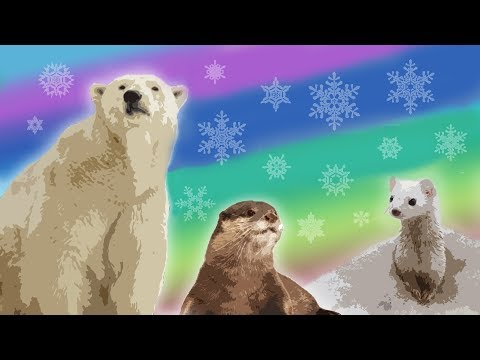 10 Arctic Animals For Kids – Snow Animals For Kids – Polar Animals