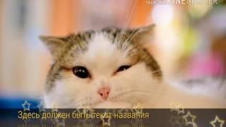 Клип с котиками