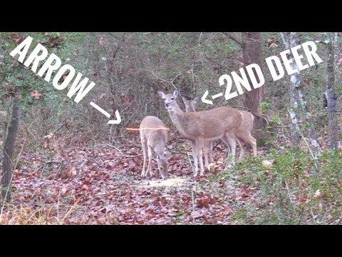 2 Deer With One Arrow?