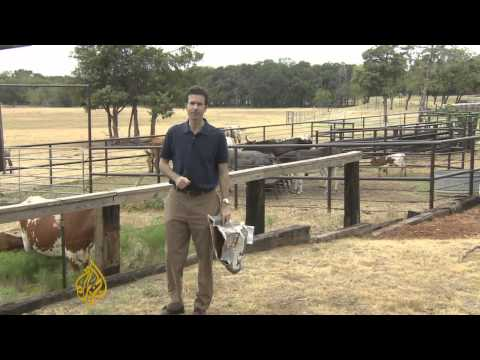 Cattle rustling makes comeback in Texas