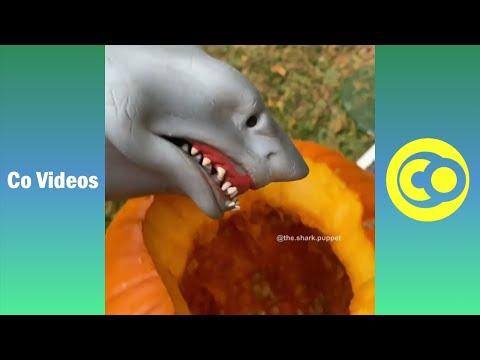 Ultimate Shark Puppet Vines Skits 2019   Funny Shark Puppet Vine Videos (W/Titles)