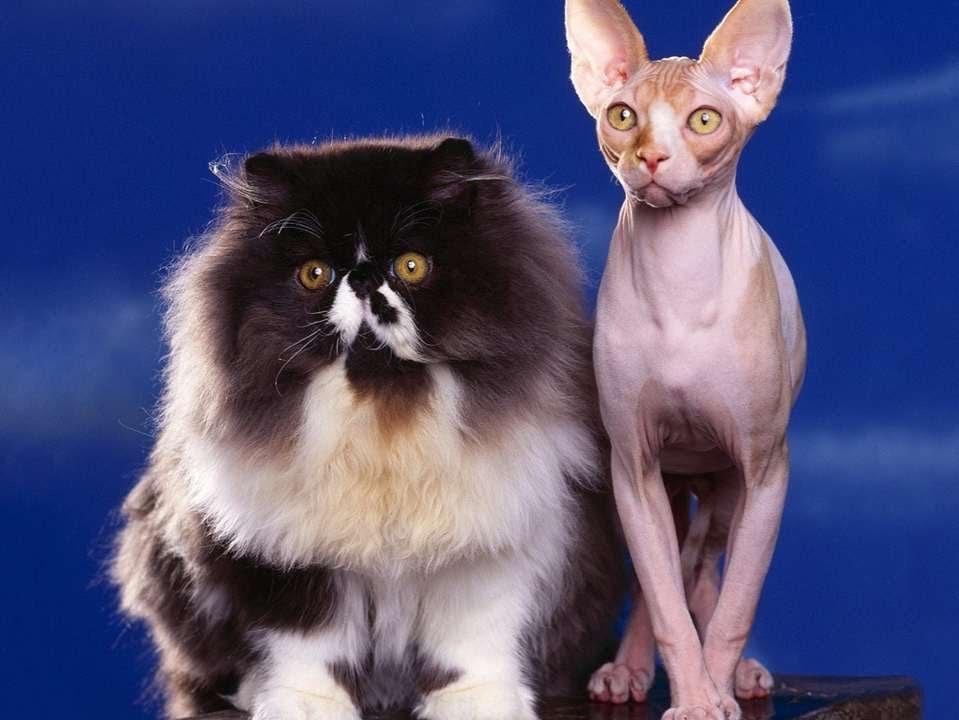 Картинки с разными кошками и надписями