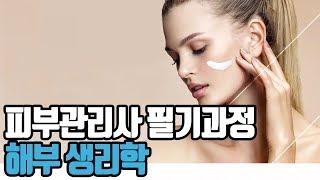 [프레듀] 피부관리사 필기과정 - 해부 생리학