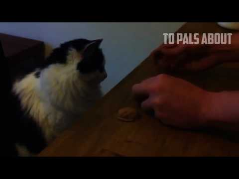 SMART CATS COMPILATION