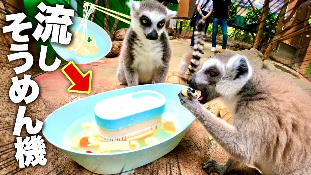 初めての流しそうめん機に動物たちの反応が予想外すぎた!ww Animals are astonished at how to serve new rice