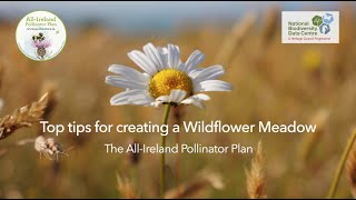 Top Tips for Creating a Wildflower Meadow