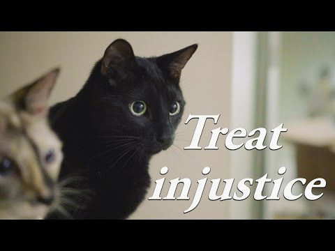 N2 the Talking Cat S4 Ep18 - Cat Treat Injustice