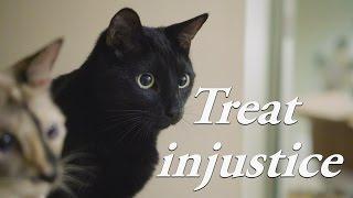 n2 the talking cat s4 ep18 cat treat injustice