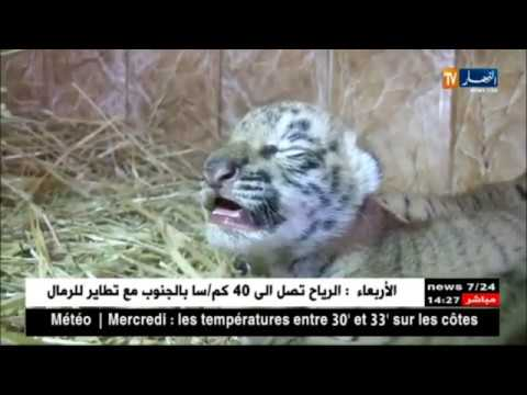 Zoo D'oran Mohamed Lion