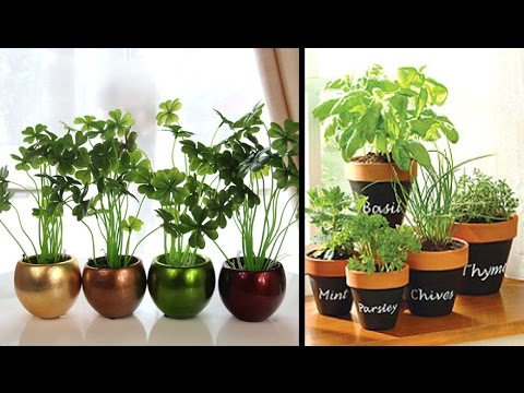 Attractive Plant Decoration For Home, Living Room, Decorate You Home With Beautiful  Plants