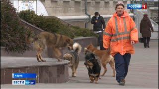 В Керчи участились случаи нападения собак на людей