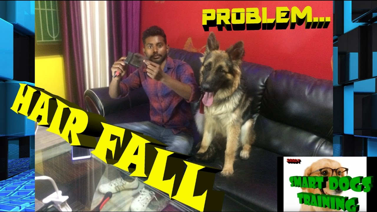How To Solve Dog Hair Fall Problem In Hindi 2017 Dog Training In