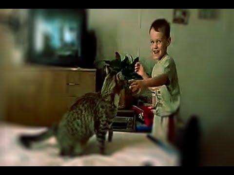 Кот отомстил школьнику