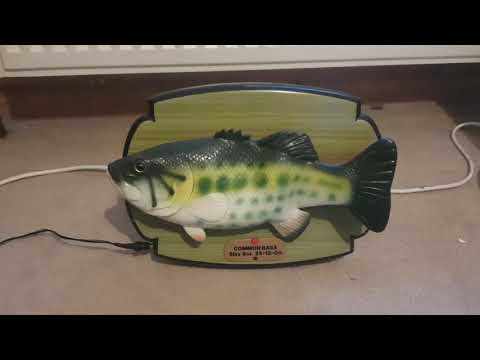 """Common Bass"" (rockin Singing Fish Variant)"