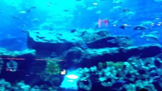 Огромный аквариум - Dubai Mall(Это видео создано с помощью видеоредактора YouTube (http://www.youtube.com/editor), 2014-08-22T04:58:09.000Z)