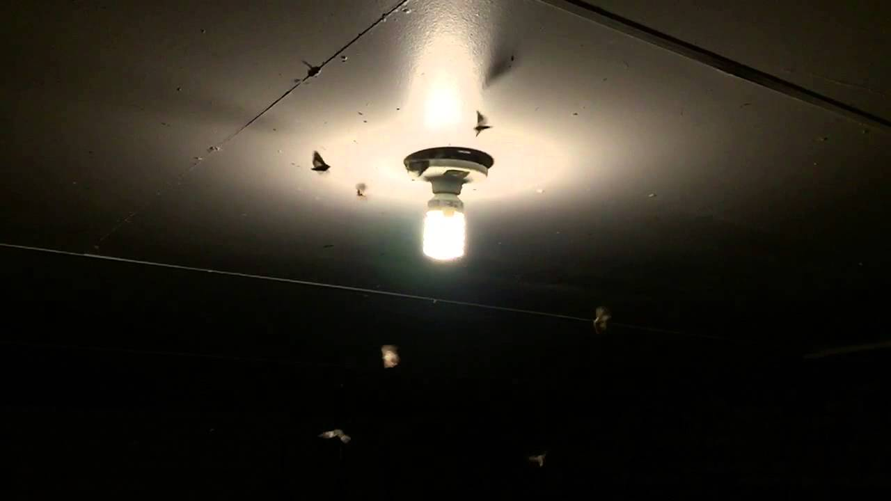 Moths Light Bulb