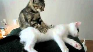 Клуб массажа для кошек